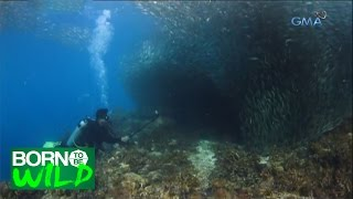 Born to Be Wild: Witnessing a Sardine School in Bohol