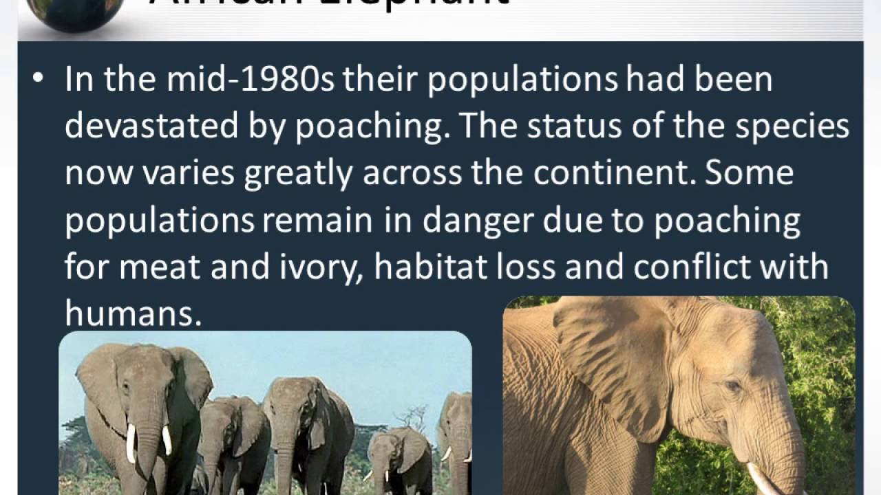 essay on conservation of endangered animals