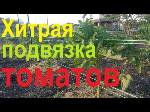 #65 Хитрый способ подвязки томатов.