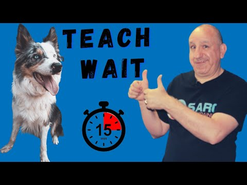 How to teach my dog the wait command - Part 2 - Separation anxiety solution