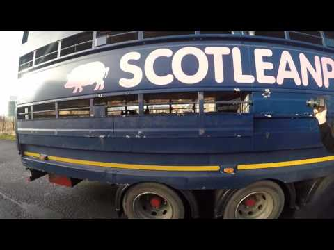 Save movement Scotland : Activist vegan group