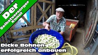 Dicke Bohnen / Saubohnen erfolgreich anbauen