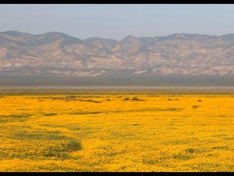 Wildflower season in SLO County