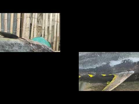 YELLOWFIN TUNA | 70KILOS | Jake McEarly