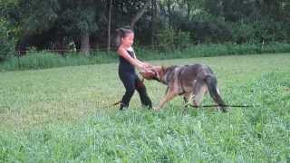 5 Years Old Girl Training Her German Shepherd To Bite To Protect Her