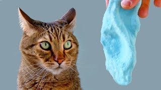 will-it-like-slime-funny-cat-reacts-to-slime