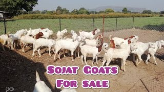 funny goats compilation