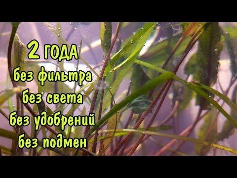2 ГОДА БЕЗ ФИЛЬТРА, БЕЗ СВЕТА, БЕЗ УДОБРЕНИЙ, БЕЗ ПОДМЕН/ NO Filter, NO CO2, NO Ferts