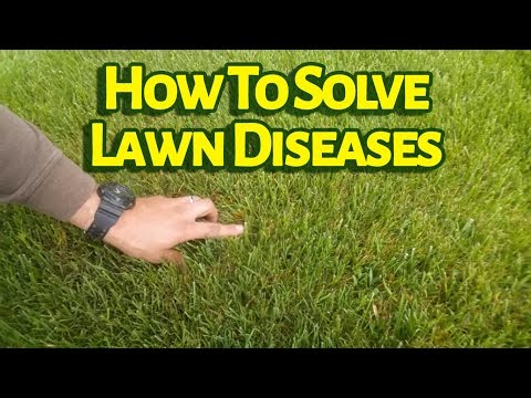 Do You Know What Fungicide Controls Lawn Diseases Like Brown Patch?