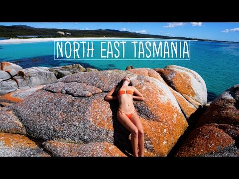 TASMANIA TRAVEL VLOG (NORTH EAST TASMANIA)