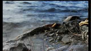 Slow Waves95-117-1D