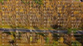 High angle view of a road trough the autumn forest with copy space.