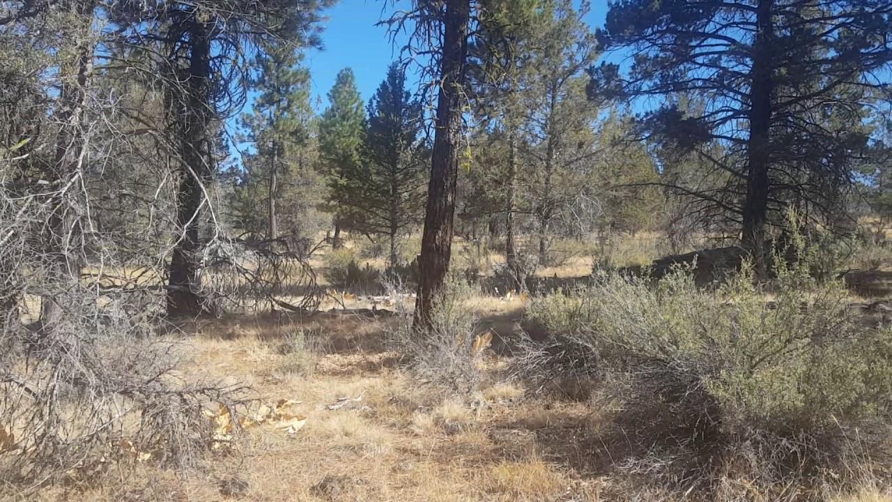 Klamath Falls Forest Estates Red Squirrel Large acreage