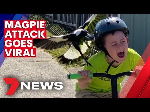 Australian Boy's Magpie Attack Caught On Camera | 7NEWS