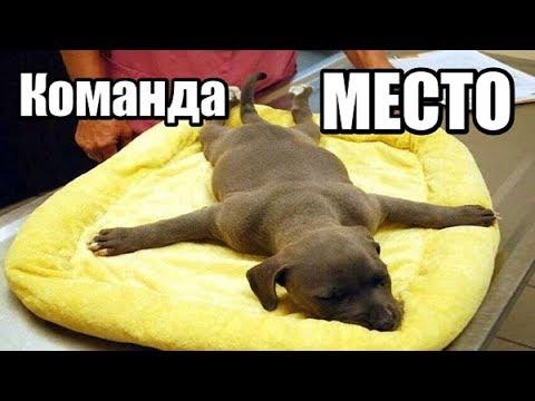 Как приучить собаку к месту в доме