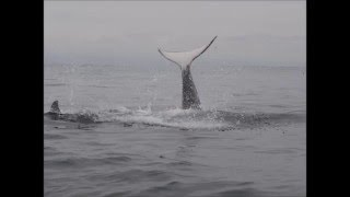 "Gustav - ""Rettet die Wale"""
