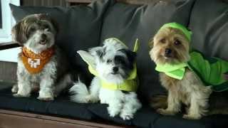 Banfield Pet Hospital - Halloween Pet Safety Tips