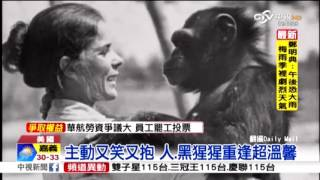 25年前救過牠 黑猩猩見恩人笑了! thumbnail