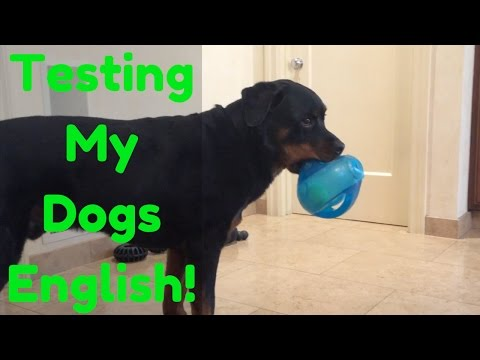 Dog Training: How Smart Is My Dog? Testing His English And How Many Words He Knows!