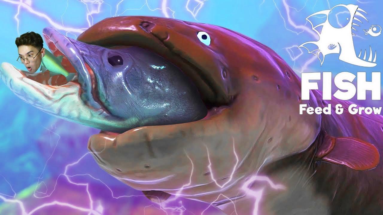 Con Lươn Điện Khổng Lồ trong trò chơi Cá Lớn Nuốt Cá Bé   LYFP Feed and Grow Fish
