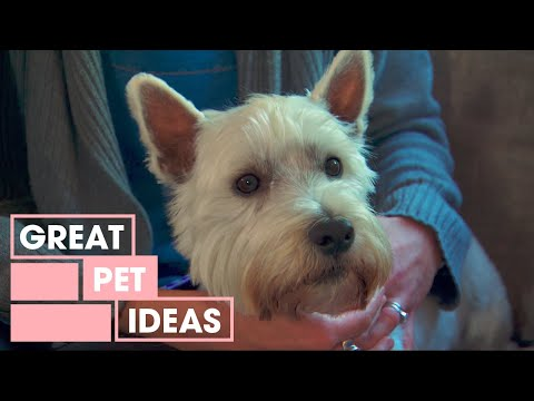 how-to-stop-a-dog-from-barking-at-the-tv-|-pets-|-great-home-ideas