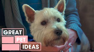 Download How To Stop A Dog From Barking At The TV | Pets | Great Home Ideas Mp3 and Videos