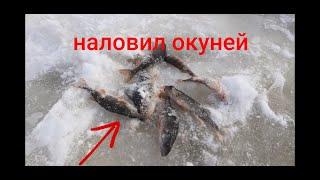 Зимняя рыбалка на окуня Наловил окуней