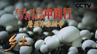 《乡土》 行走阡陌 乡村振兴中国行 蘑菇丰收时节 20180706 | CCTV农业