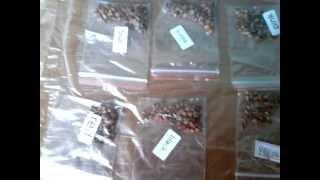 Семена из КИТАЯ)))) Выращивание роз  и клубники 1 видео(, 2015-04-07T12:01:10.000Z)