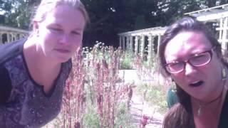 Project Grow Harvesting Quinoa Part 1