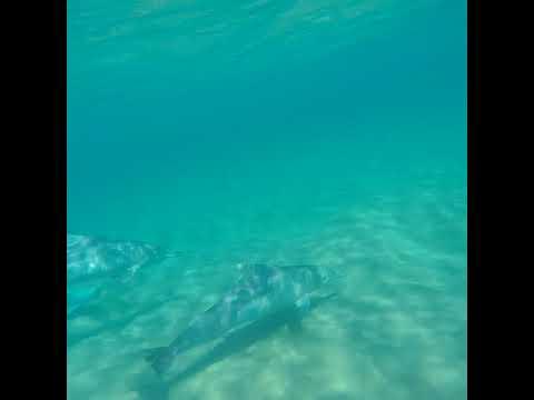 Sünnitoetus delfiinienergiaga