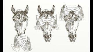 Konie Skaryszewa -  Fundacja tara
