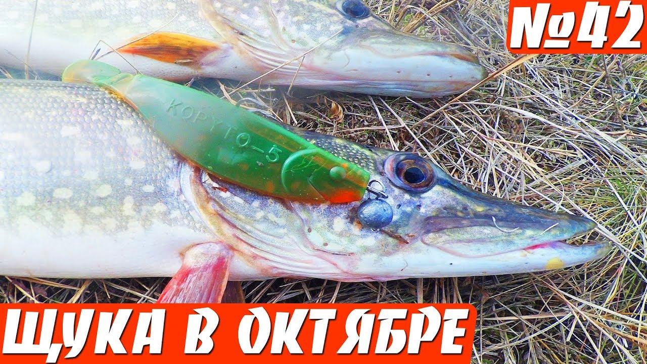 Щука осенью на силикон. Рыбалка на щуку в октябре