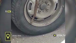 Змея длиною более метра вылезла из колеса машины в Уфе