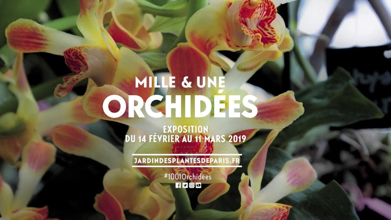 Mille & une orchidées 2019 - YouTube