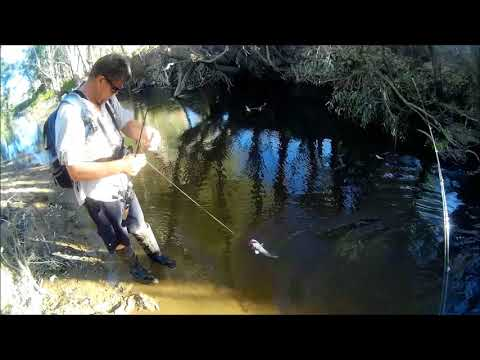 Murray Cod And Trout Cod Fishing In Twig Water