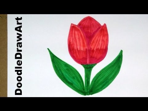 Drawing How To Draw Cartoon Tulip Flower Easy Drawing