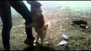 Собака та чует течку)))