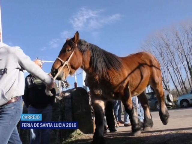 Feria Santa Lucia en Carrejo 2016