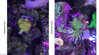 Forget what you know about nitrates and phosphates in reef tanks!