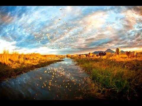Central America Trek Safaris Duck hunting!!! Amazing!