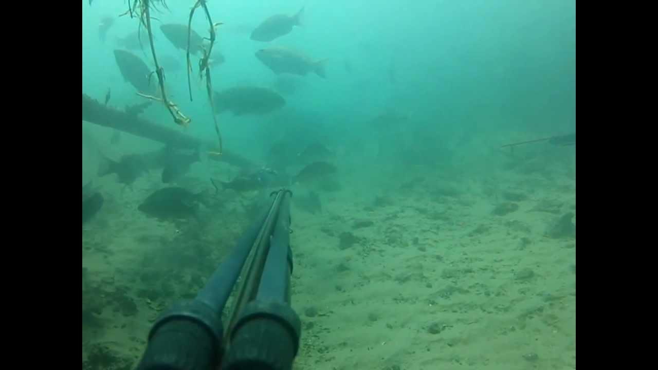 Spearfishing Gold Coast Gopro