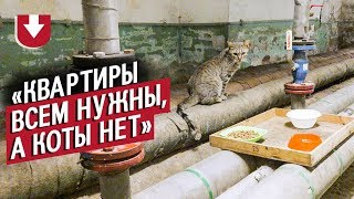 70 котов живет в Эрмитаже А вы знали