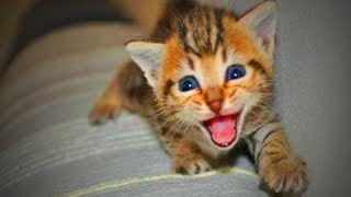 Funny Cats Talking 🐱🐶 Amazing Kittens And Cats Talking (Part 1) [Funny Pets]