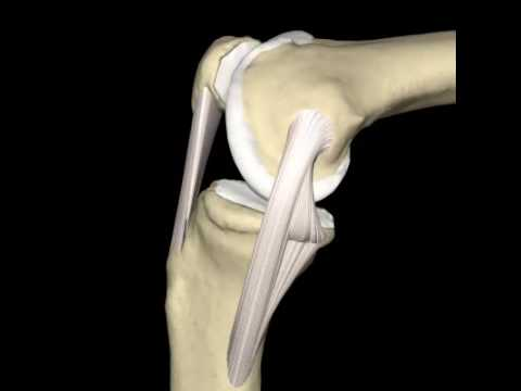 Knee & Medial Collateral Ligament Animation, ©Primal Pictures Ltd