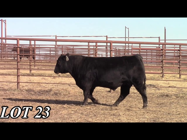 Mead Angus Farms Lot 23