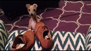 Peach Caught Trying to Eat My Shoe