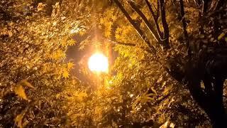 거리의 가로등 들려주는 밤 빗소리