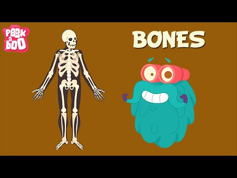 Bones | The Dr  Binocs Show | Learn Videos For Kids