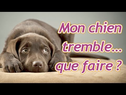 mon chien tremble que faire youtube. Black Bedroom Furniture Sets. Home Design Ideas